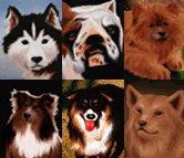 """Le copertine delle famose riviste """"Il Cane"""""""